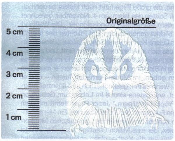 aletheias welt das wintergoldhà hnchen der kleinste vogel