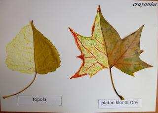 liście z dorysowaną pastelami olejnymi drugą połówką