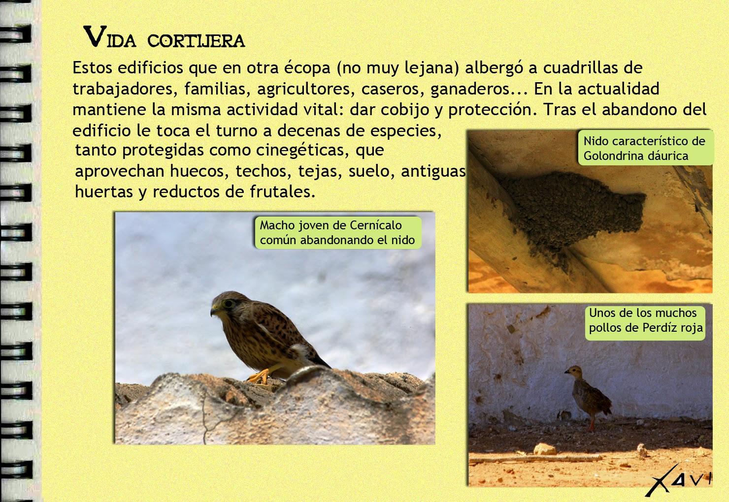 Cuadernos de campo ZEPA Campiñas de Sevilla