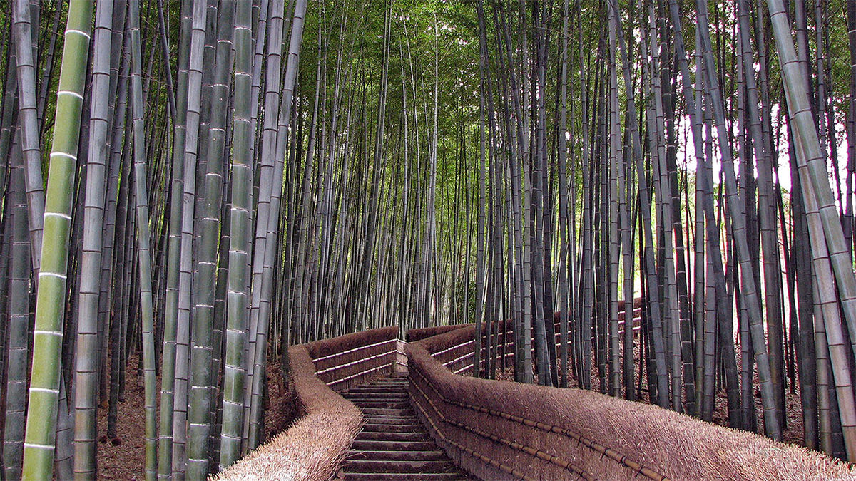 Descubre TU MUNDO: Sagano: el precioso bosque de bambú