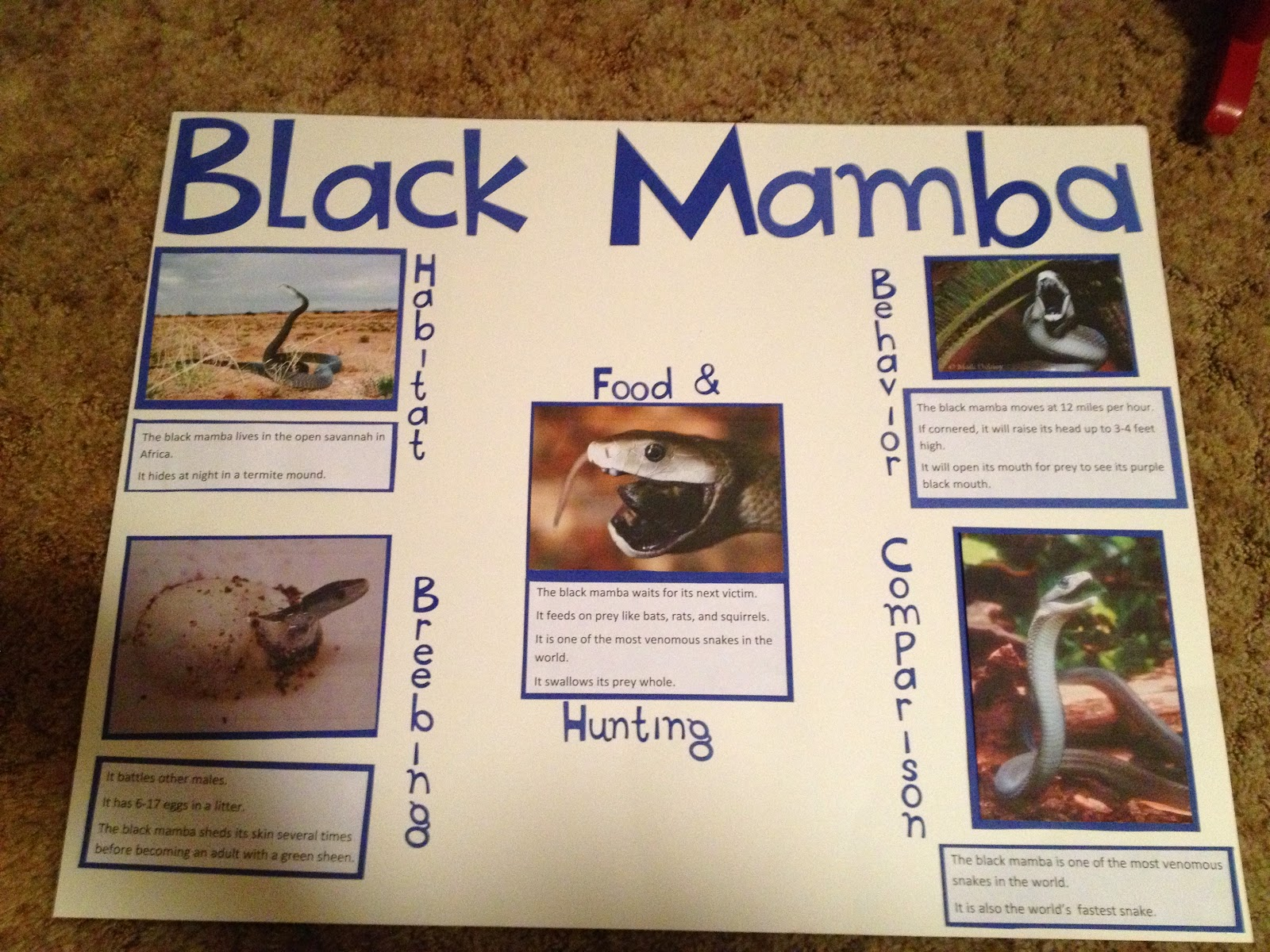 how to make a poster for school project