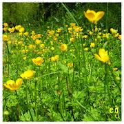 les fleurs de printemps! img