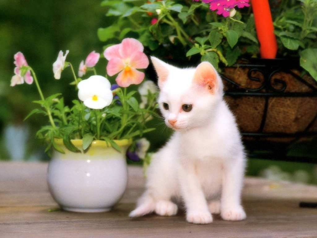 Cat Kittens Wallpaper 2
