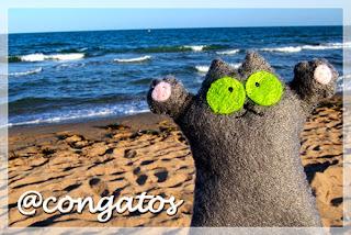 gato fieltro playa mar gatera rumbo