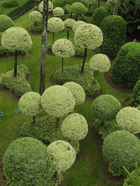 topiary garden in shades of green content in a cottage. Black Bedroom Furniture Sets. Home Design Ideas