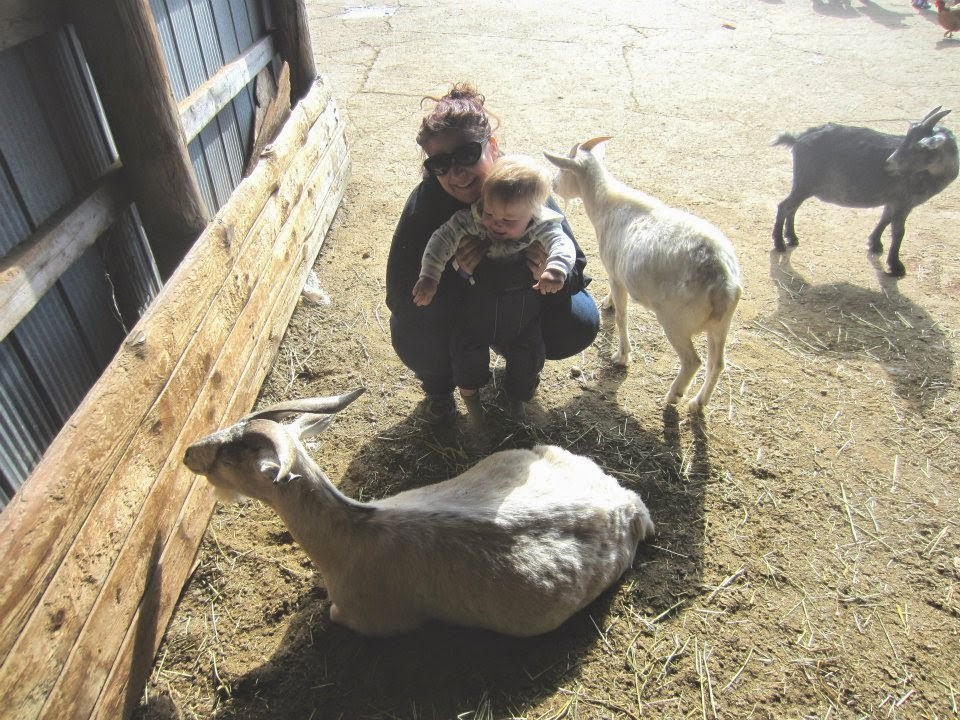 petting zoo, baby goats and baby boy