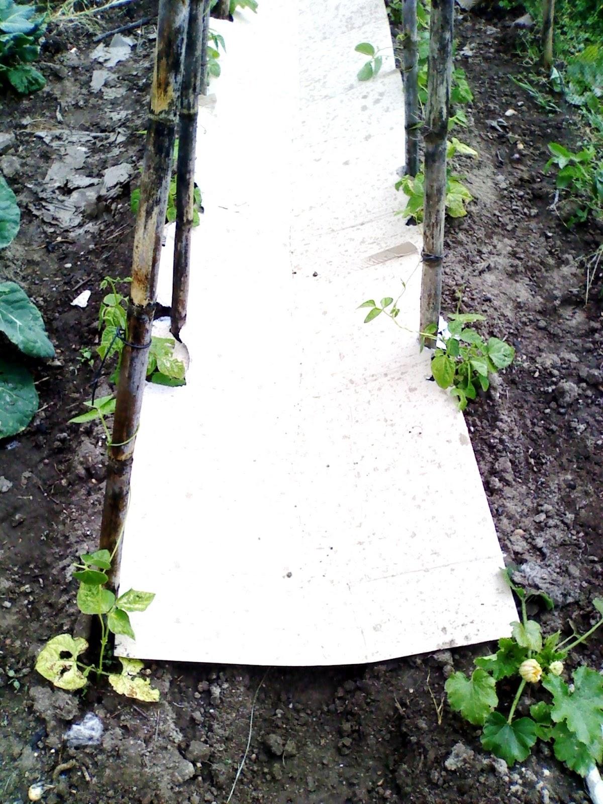 Controlar ervas daninhas com cartão