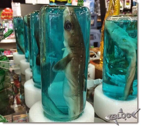tiburones en frascos