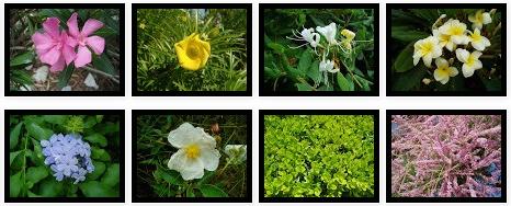 Fotos de arbustos de hoja perenne