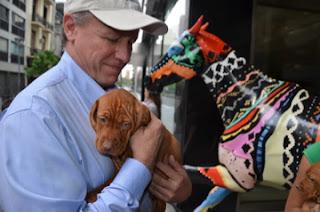 Man holding vizsla puppy