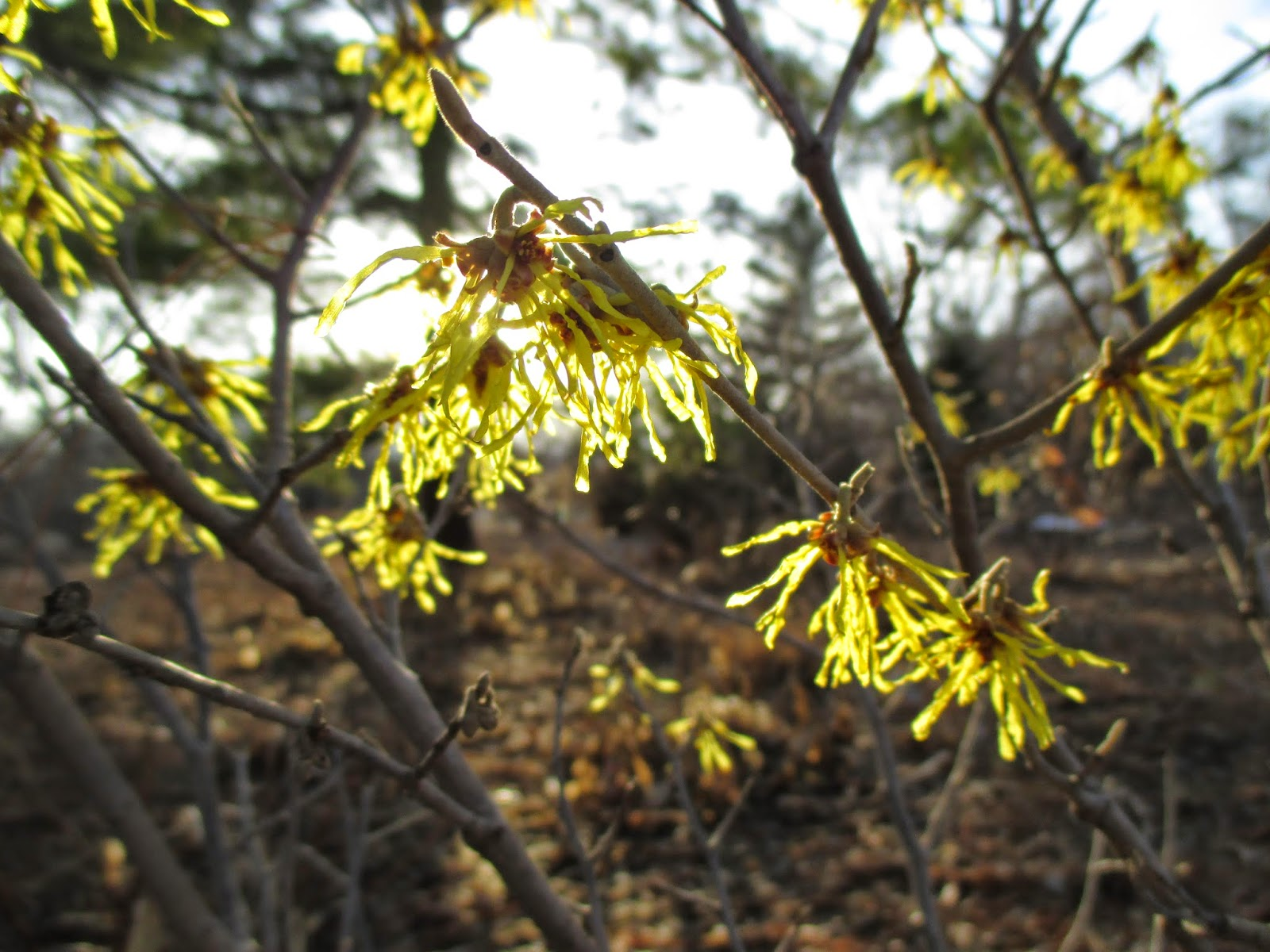 Olbrich Awakens Too - Rotary Botanical Gardens