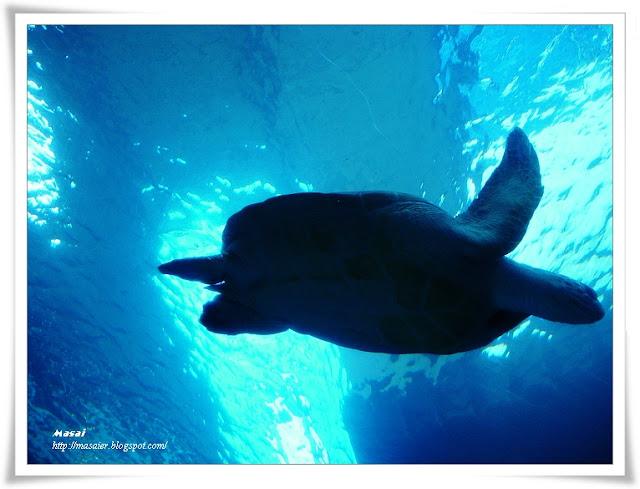 澎湖水族館-海底隧道-巨型龜