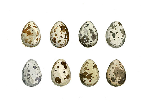 quail eggs watercolor painting