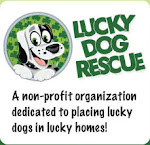 Lucky Dog Rescue