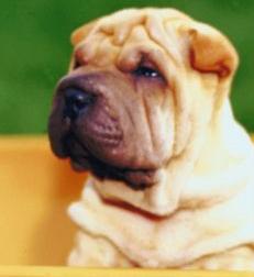 Dog Skin And Coat Care