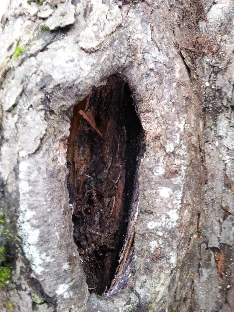 maison la campagne quand un arbre remplace un fruitier. Black Bedroom Furniture Sets. Home Design Ideas