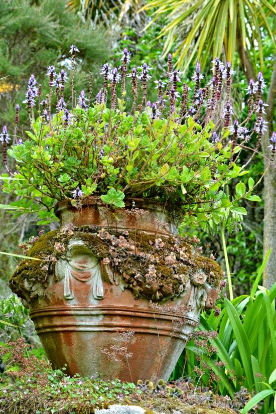 Flowers in Tresco Abbey Gardens