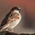 AVE DEL AÑO 2016 SEO/BirdLife