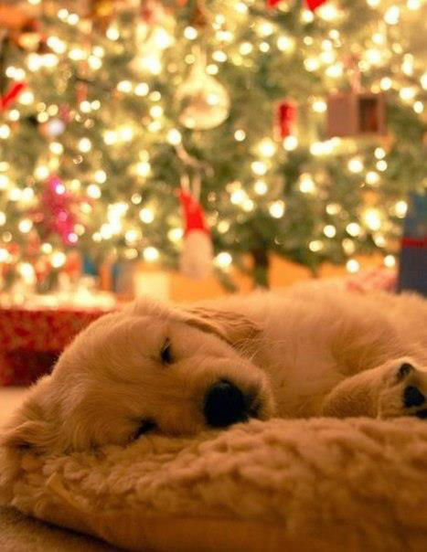 Puppies And Christmas Trees