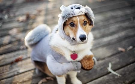 Cosplay dog funny animal