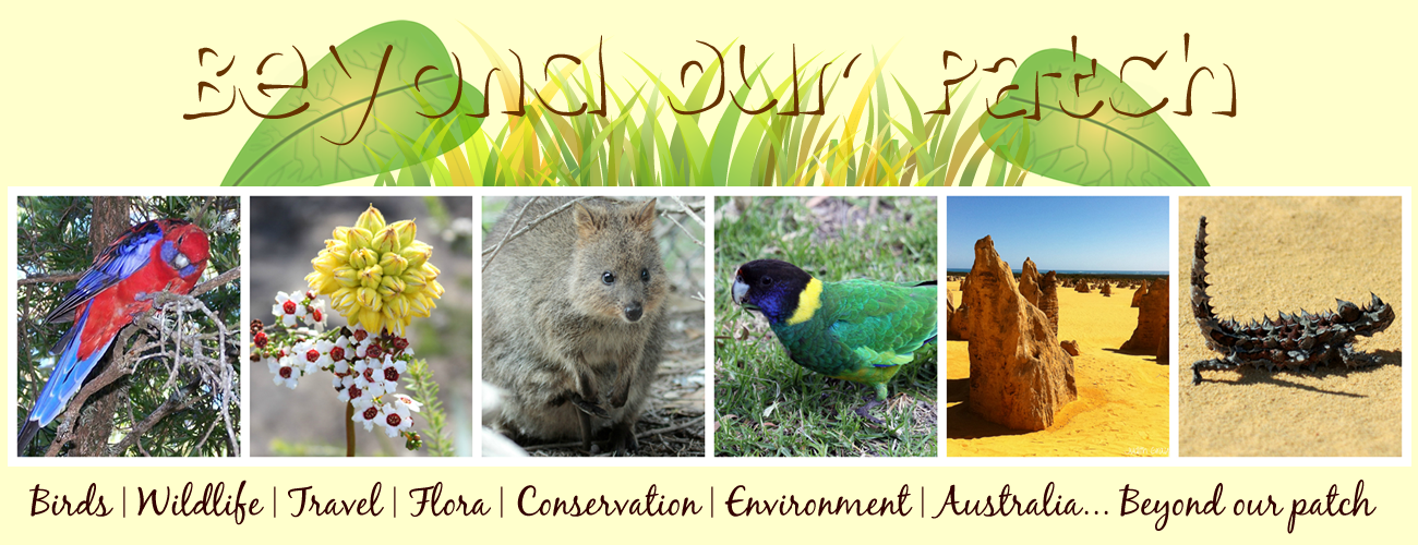 Beyond Our Patch - Australian Birds Environment Wildlife Travel & Conservation