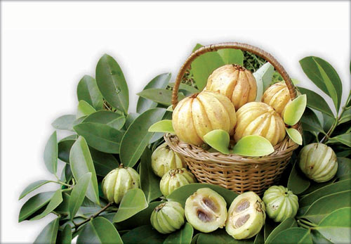 ... vitamin C yang tinggi dan selalu digunakan sebagai tonik merawat