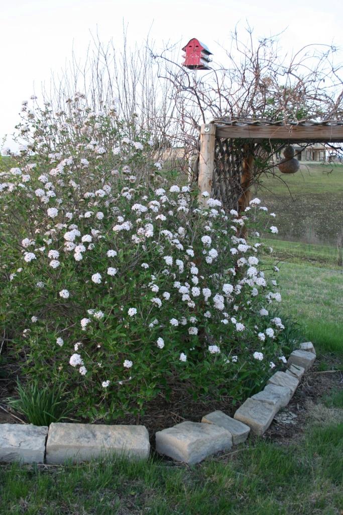 Garden Musings Sweet Smell Of Spring