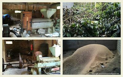 Kopi, Pengupas Kopi, Limbah Kulit Kopi Takengon Aceh