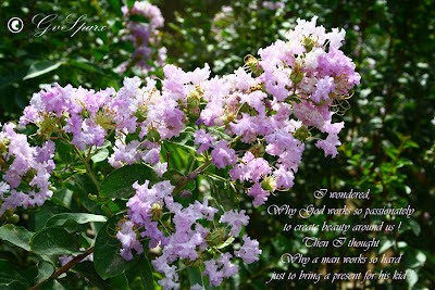 beautiful pink flowers, inspirational quotes