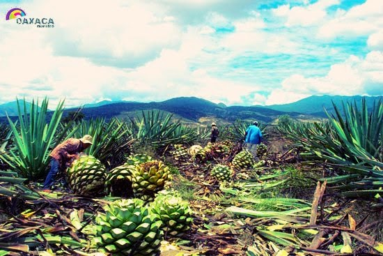 Fotograf as y paisajes for Viveros en oaxaca