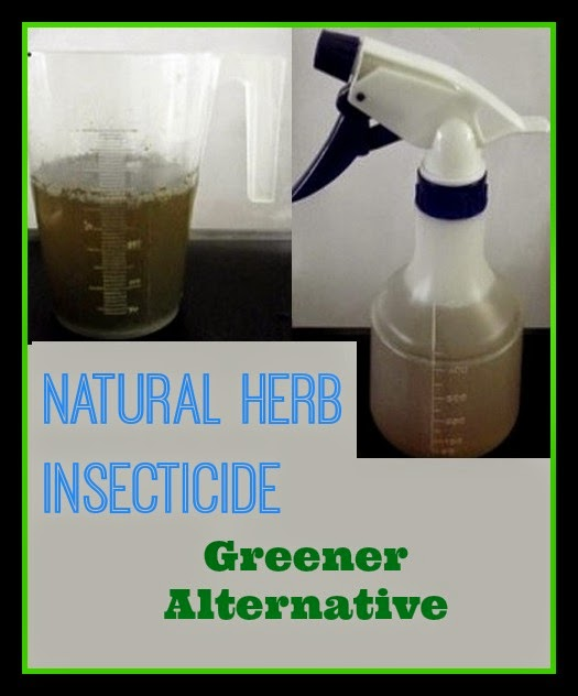 Natural Bug Killer Recipe by Fair Dinkum Seeds
