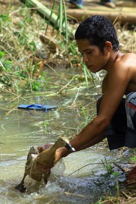 Pacu Itik Payakumbuh Sumatera Barat