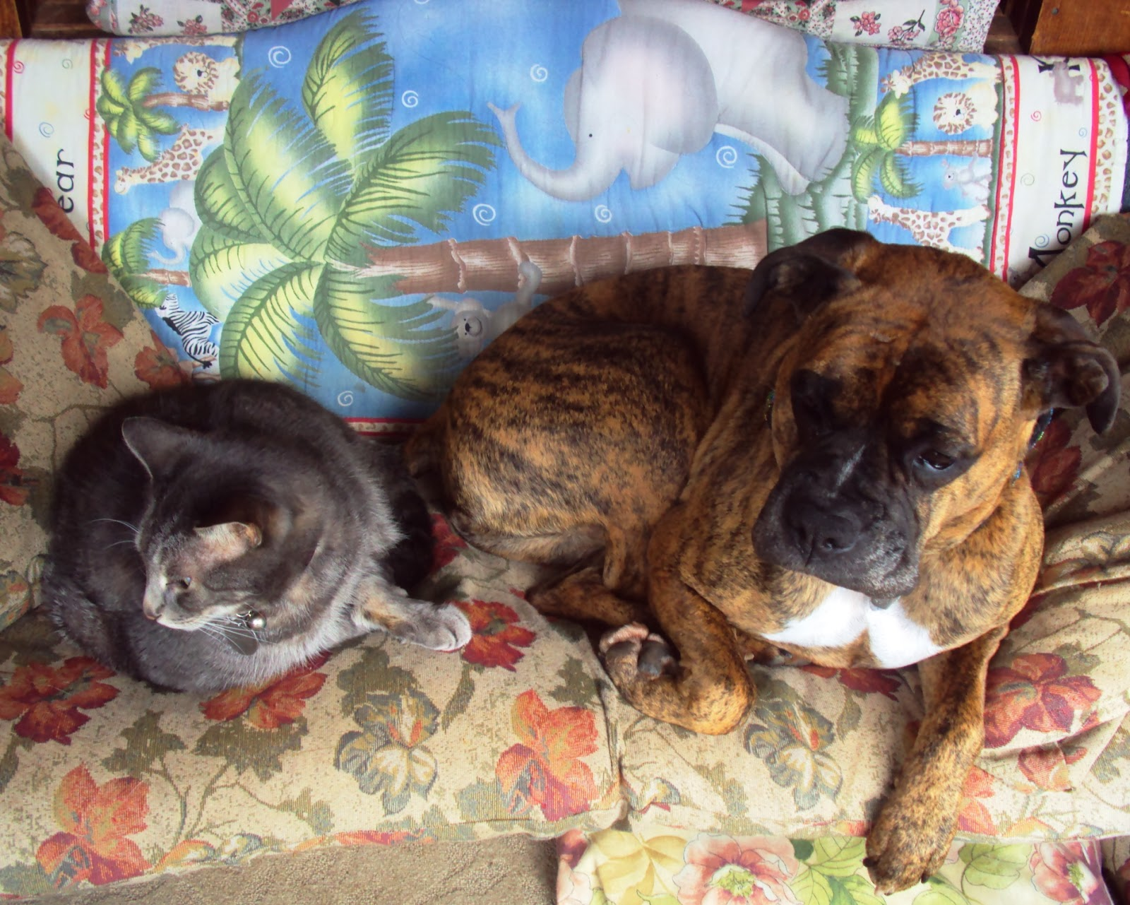 Ottawa Valley Dog Whisperer NATURAL HERBAL EAR INFECTION