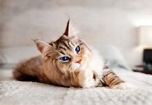 Queen-Nettle-she-cat