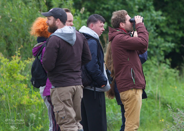 Birding, Birdwatching, Rainham, RSPB