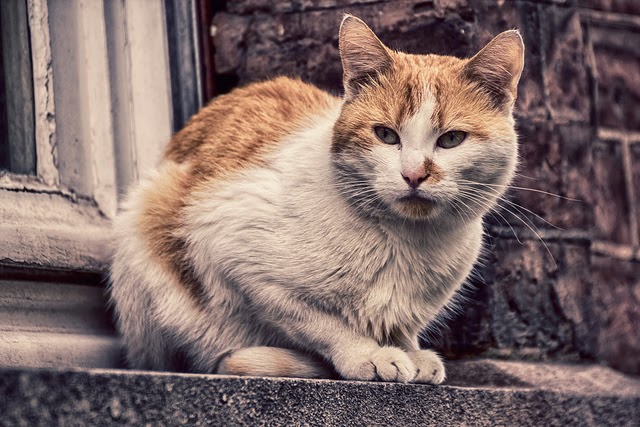 cat on a stoop