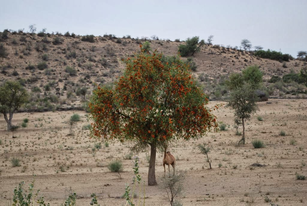 Tharparkar, Thar Desert-Sindh, Pakistan - Exploring ...