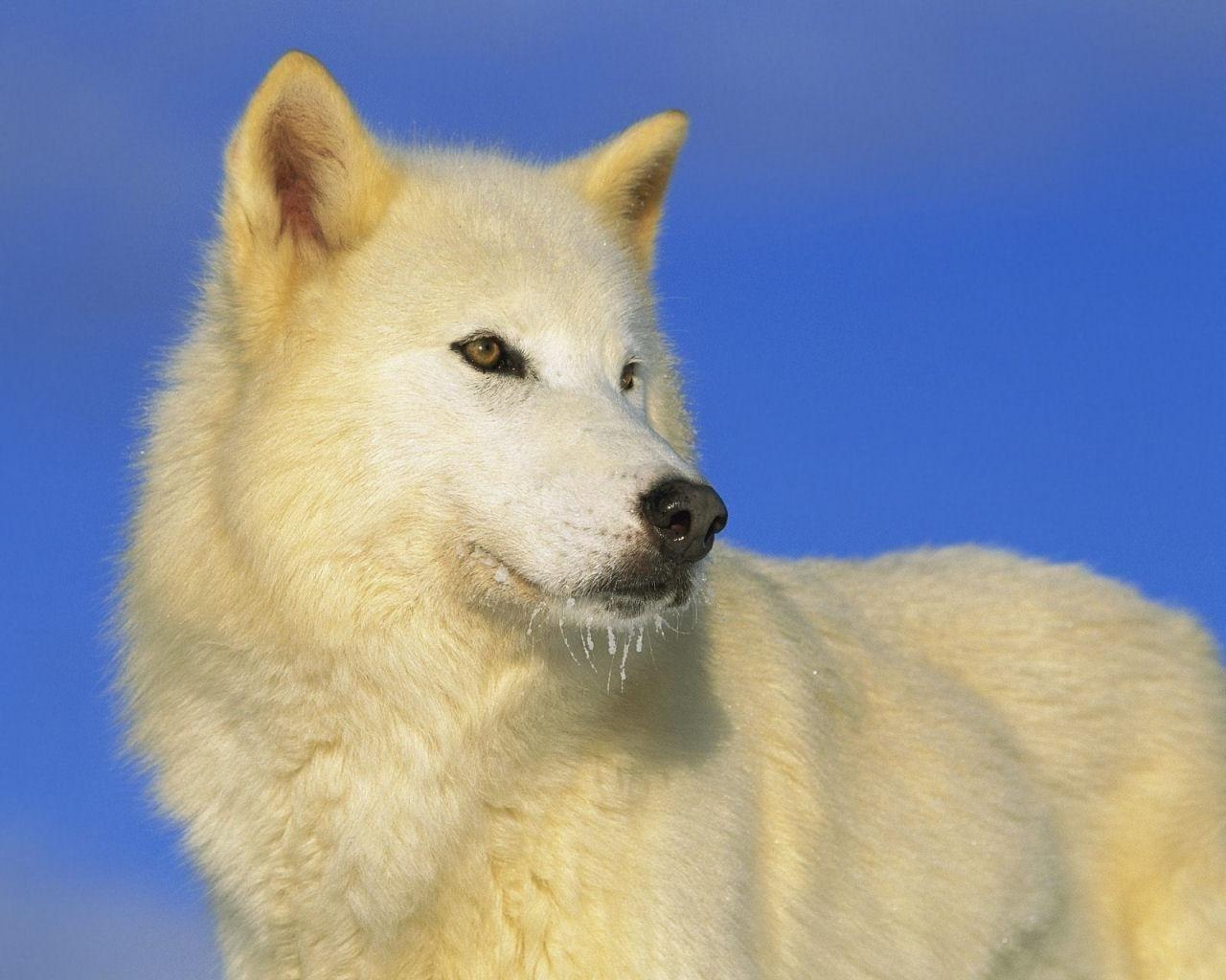 Animales Salvajes [Primera Parte] | Fotos e Imágenes en FOTOBLOG X