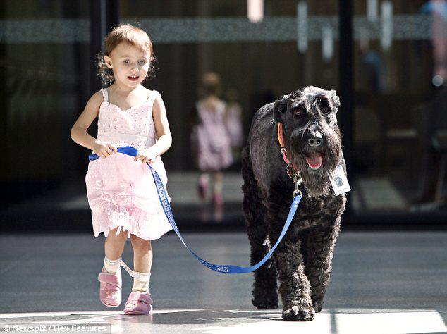 ralf, perro, milagro, milagroso, miracle, niño, enfermo, hospital, dog, pet