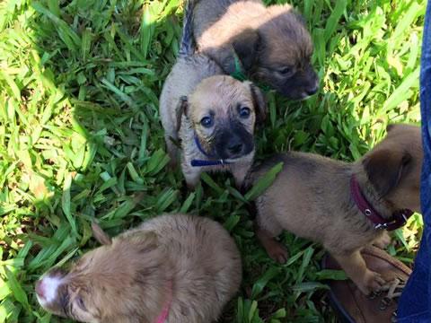 Perritos rescatados en la selva 11