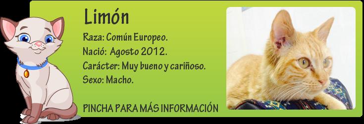 http://mirada-animal-toledo.blogspot.com.es/2014/01/limon-gatito-atrapado-en-un-cepo.html