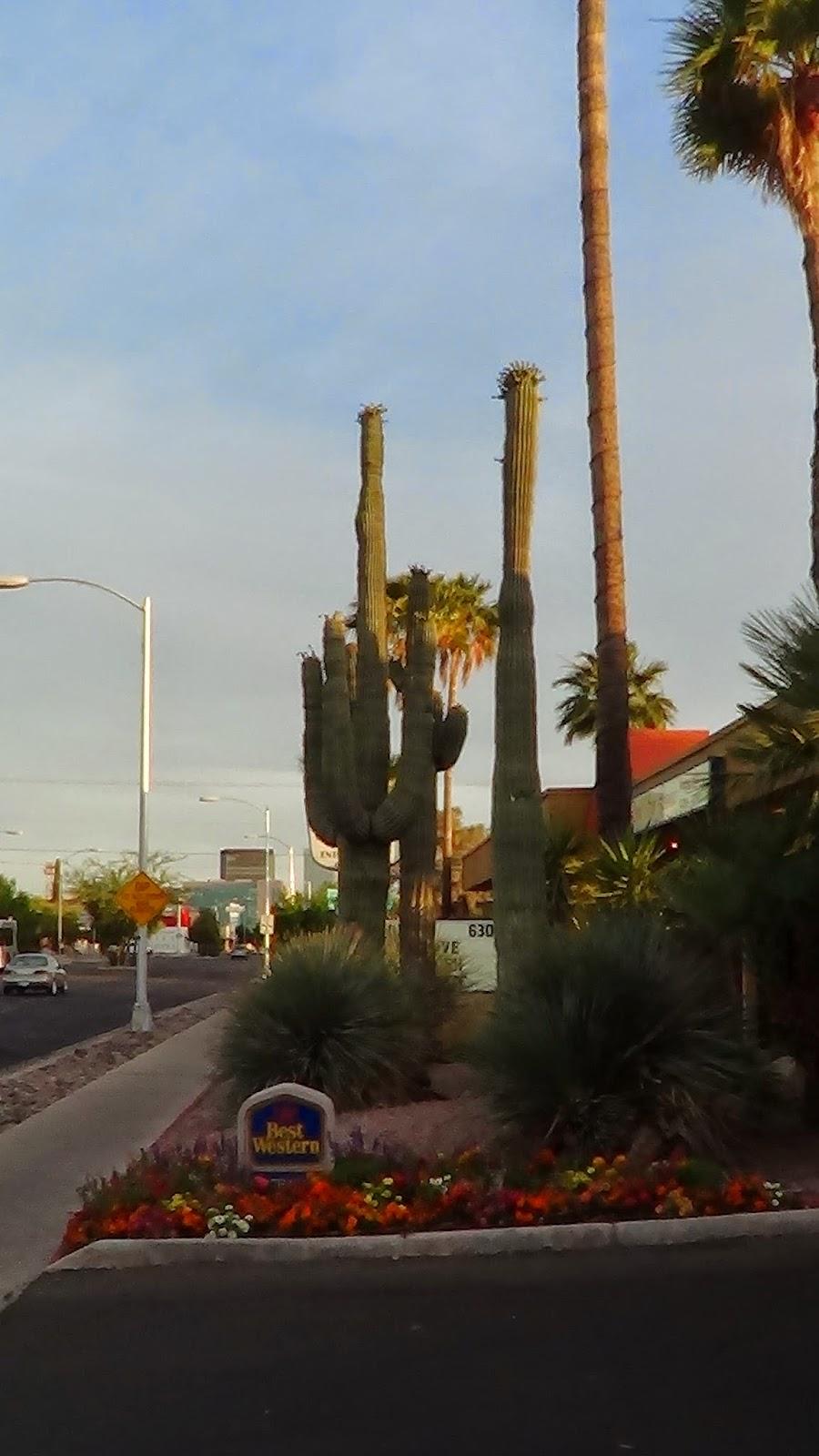 кактузы-аризона-пустыня