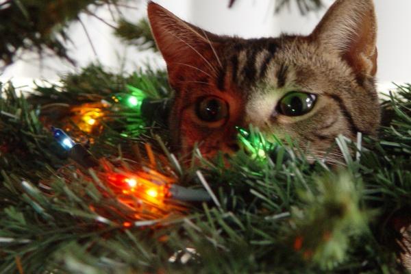 Cat Thursday Cats Amp Trees