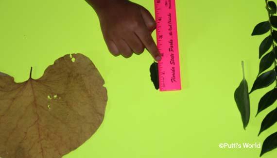 maths with leaf
