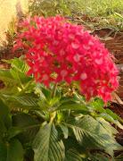Flores da primavera no jardim do Pedretti
