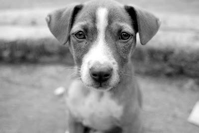 perro callejero en blanco y negro