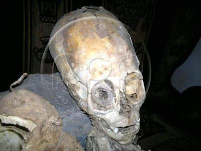 scheletro alieno cuzco