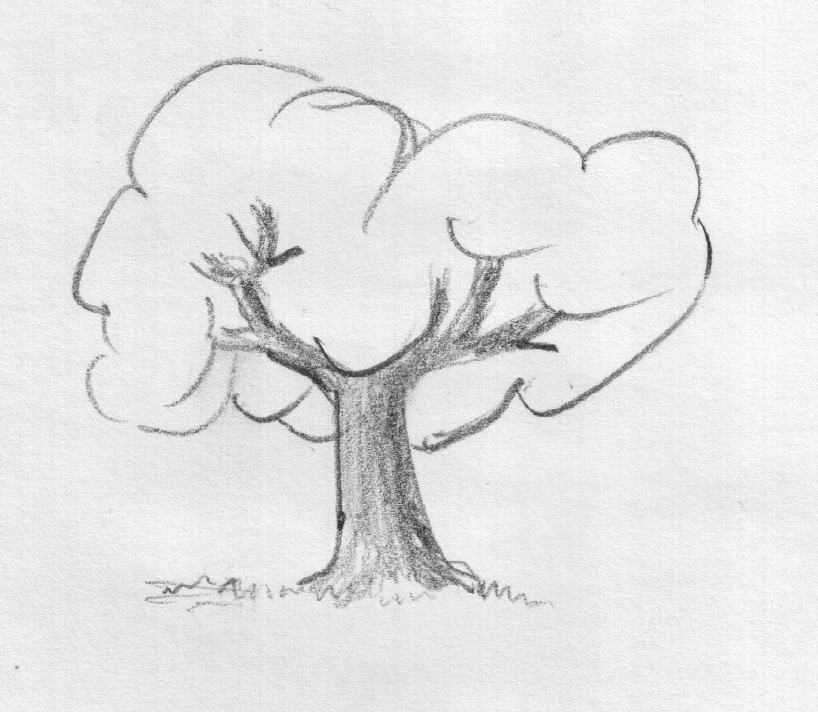tree drawings google search image from http4bpblogspotcom j9jdf7eiae0