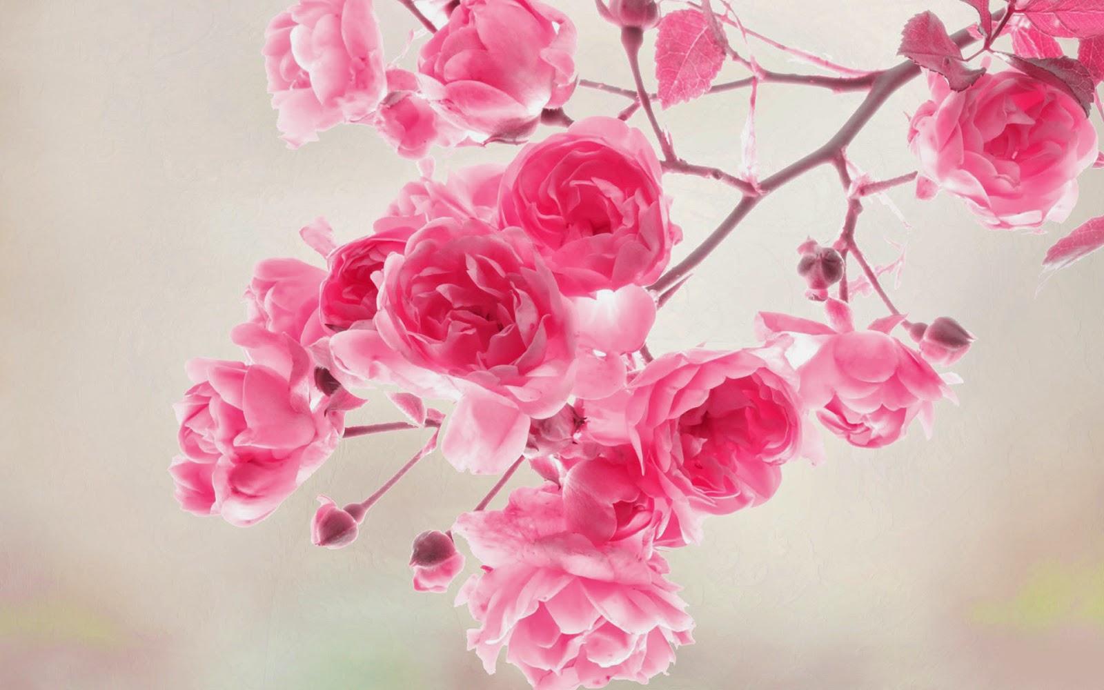 Friends club dp pink flower hd wallpapers dp pink flower hd wallpapers mightylinksfo