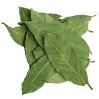 Daun Salam (Eugenia polyantha)